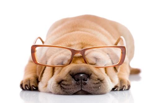 Собака - лучший способ защитить себя от сахарного диабета