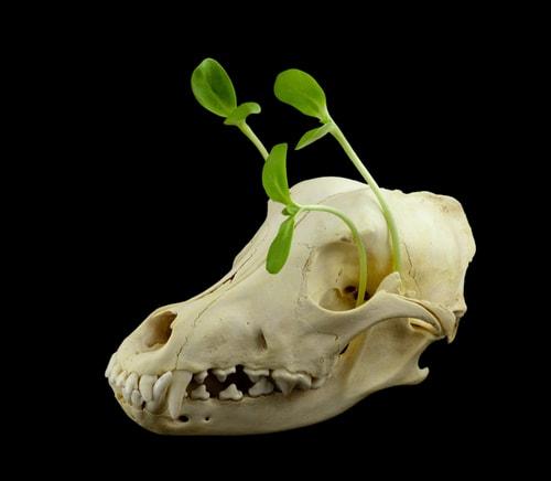 Тканевый каркас - как заново вырастить кости?